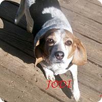 Adopt A Pet :: JODI - Ventnor City, NJ