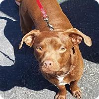 Adopt A Pet :: Jonathan - Las Vegas, NV