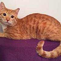 Adopt A Pet :: Taffy - Merrifield, VA