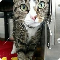 Adopt A Pet :: Zinkah - Chaska, MN