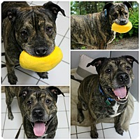 Adopt A Pet :: Bumi - Forked River, NJ