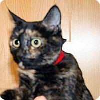 Adopt A Pet :: Amirs - Wildomar, CA