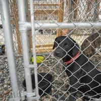 Adopt A Pet :: Karman - Opelousas, LA