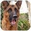 Photo 1 - German Shepherd Dog Mix Dog for adoption in El Cajon, California - Fritz