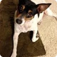 Adopt A Pet :: Bobo - justin, TX