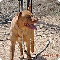 Adopt A Pet :: Smith - Los Angeles, CA
