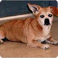 Adopt A Pet :: Marla - Winder, GA