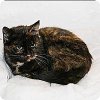 Adopt A Pet :: Sushi - Syracuse, NY