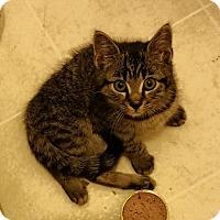 Adopt A Pet :: Zeus - Port Republic, MD