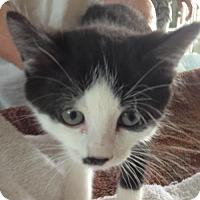 Adopt A Pet :: Ted - Hamilton, ON