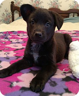 Terrier (Unknown Type, Medium) Mix Puppy for adoption in Homewood, Alabama - Tootsie