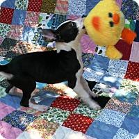 Adopt A Pet :: Aspen - Raleigh, NC