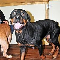 Adopt A Pet :: Pattie - Houston, TX