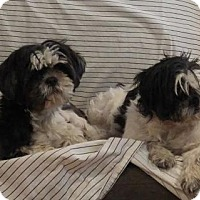 Adopt A Pet :: Madge and Millie - Toronto, ON