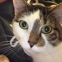 Adopt A Pet :: Haley - Schaumburg, IL