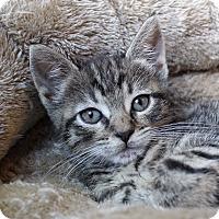 Adopt A Pet :: Kimmel - Wayne, NJ