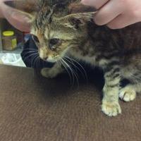 Adopt A Pet :: 36177288 - Anderson, SC