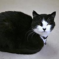 Adopt A Pet :: Blackjack - Adams, WI