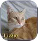Domestic Shorthair Cat for adoption in Aldie, Virginia - Lizzie