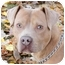 Photo 1 - American Pit Bull Terrier/American Staffordshire Terrier Mix Dog for adoption in Chicago, Illinois - Magnum