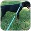 Photo 3 - Labrador Retriever Dog for adoption in kennebunkport, Maine - Angel - in Maine!