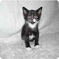 Adopt A Pet :: Falls Church Four - Arlington, VA