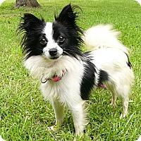 Adopt A Pet :: Morgana - Mocksville, NC