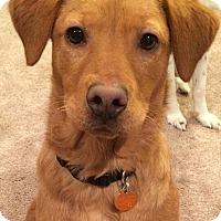 Adopt A Pet :: Abel - Staunton, VA