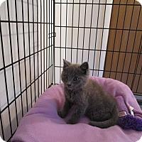 Adopt A Pet :: Nemo - Speonk, NY