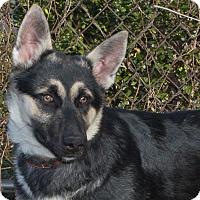Adopt A Pet :: Austin - Elmwood Park, NJ