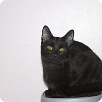 Adopt A Pet :: .Shittake - Ellicott City, MD