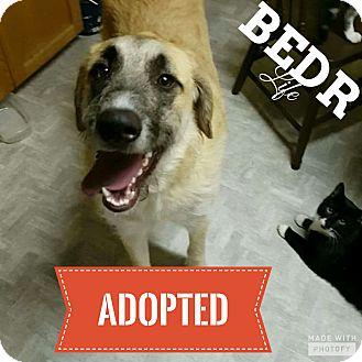Maremma Sheepdog/Irish Wolfhound Mix Dog for adoption in Regina, Saskatchewan - Mickey