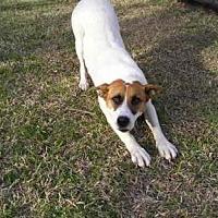 Adopt A Pet :: Suzzie - Quinlan, TX