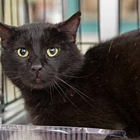 Adopt A Pet :: Fernando - Merrifield, VA