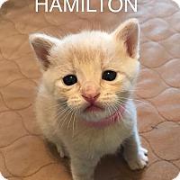 Adopt A Pet :: Hamilton - Merrifield, VA
