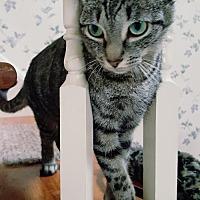 Adopt A Pet :: Jesse - Elizabethtown, PA