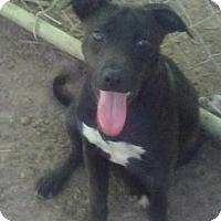 Adopt A Pet :: Macon - Old Bridge, NJ