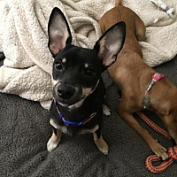 Adopt A Pet :: Tilly & Koda Courtesy Posting - Tucson, AZ