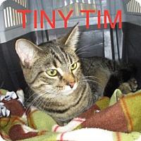 Adopt A Pet :: TINY TIM-adopted 8-12-17 - detroit, MI