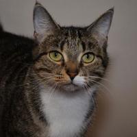 Adopt A Pet :: Krista - Elkhorn, WI