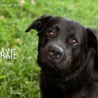 Adopt A Pet :: Maxie - Newton, IA