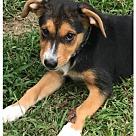 Adopt A Pet :: Baby Buffy
