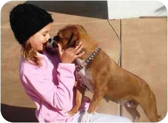 Dachshund/Beagle Mix Dog for adoption in El Cajon, California - Precious