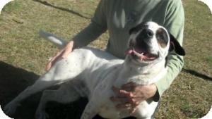 Hound (Unknown Type) Mix Dog for adoption in Philadelphia, Pennsylvania - Boo
