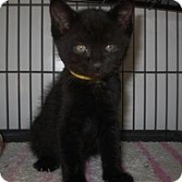 Adopt A Pet :: Harley - Shelton, WA