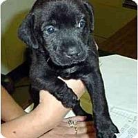 Adopt A Pet :: POPPY - dewey, AZ