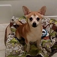 Adopt A Pet :: Leon/TN - Columbia, TN