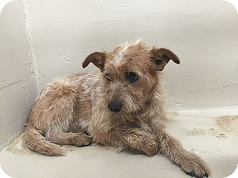 Terrier (Unknown Type, Medium) Mix Dog for adoption in Middlebury, Connecticut - Angel