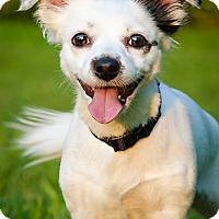 Adopt A Pet :: Izzy - Owensboro, KY