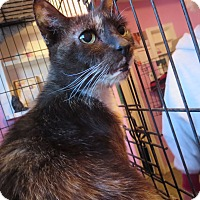Adopt A Pet :: Gabby - Coos Bay, OR